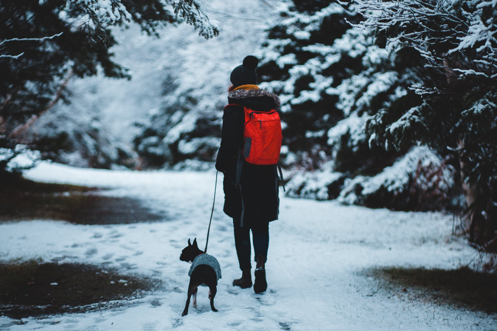 man in black jacket and black pants standing on snow covered ground with black and white dog
